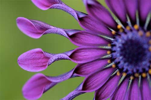 flower_macro2