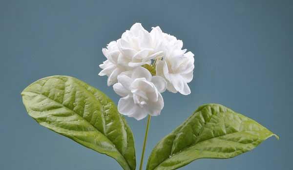 flower_macro3