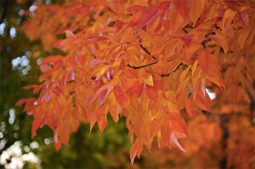 ピントの合っている所から少し後ろの葉っぱはうっすらボケていて、後ろの緑の木の葉っぱは完全にボケている。このように、フォーカスは段階的にボケていくのである。